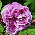 Fri 08/07/2005 17:51 rose